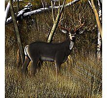 Buck in the Brush Photographic Print