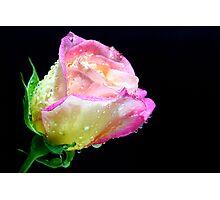 Rose With Diamonds Photographic Print