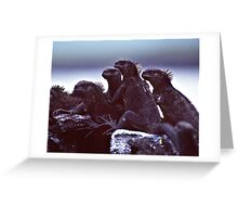 Marine Iguanas Greeting Card