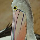 Percy Pelican,long time resident of Hastings,Victoria. by Peter Rowley