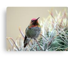 Sherbert Colored Hummer Canvas Print