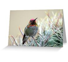 Sherbert Colored Hummer Greeting Card