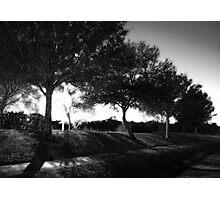 Night Trees Photographic Print