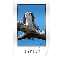 OSPREY WITH CARPE (FISH) Poster