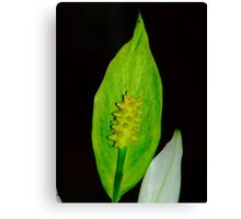 Macro Lilly Canvas Print