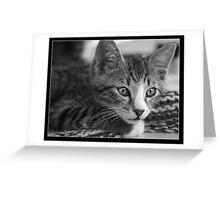 Squeak The Cat Greeting Card