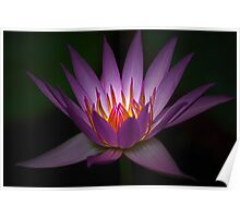 Waterlily Glow Poster