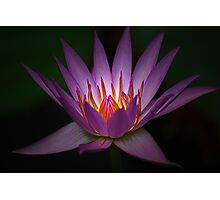 Waterlily Glow Photographic Print