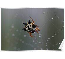Jewel Spider 1 Poster