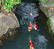 Koi River by Harlequitmix