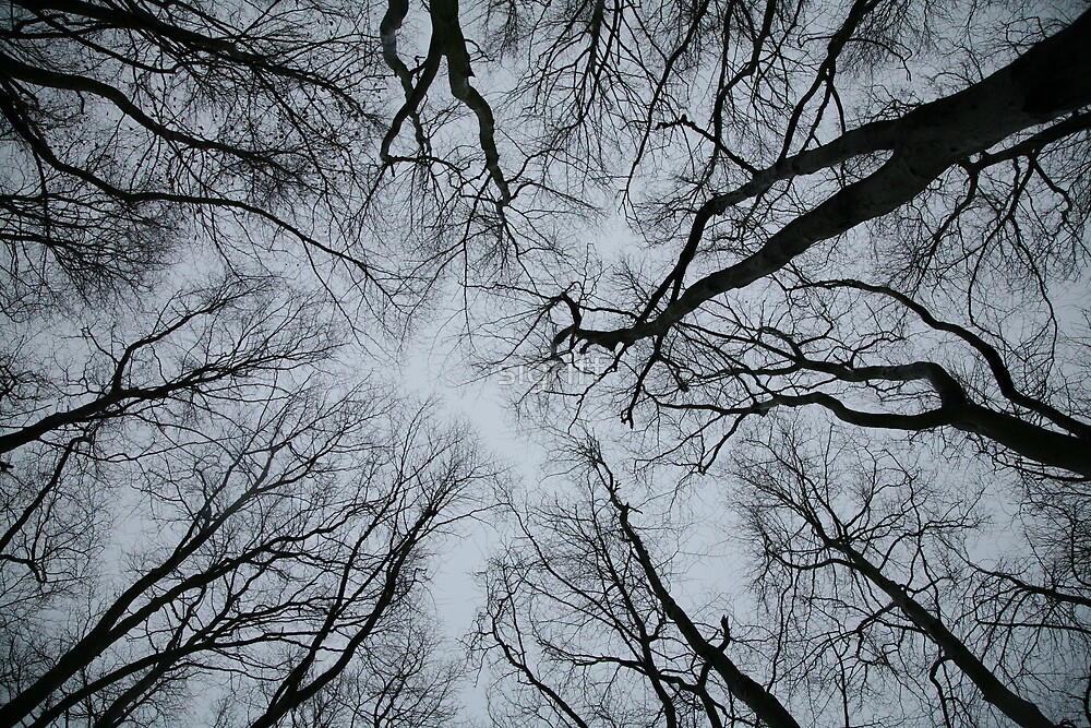 Root or Branch v 01 : Photography by Alys Griffiths by sigriff