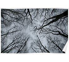 Root or Branch v 01 : Photography by Alys Griffiths Poster