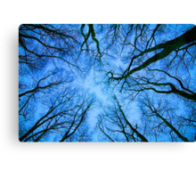 Root or Branch v 03 : Photography by Alys Griffiths Canvas Print