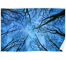 Root or Branch v 03 : Photography by Alys Griffiths Poster
