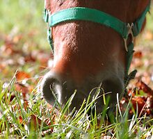 Autumn muzzle by hettie