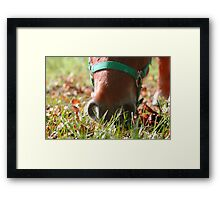 Autumn muzzle Framed Print