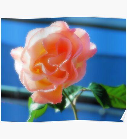 A BEAUTIFUL PINK ROSE Poster