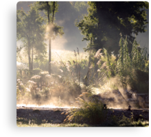 Steamy Morning Koi Pond II Canvas Print