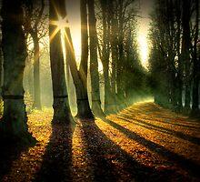 Shine on by Martyn Starkey
