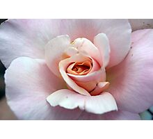 My Rose Photographic Print