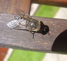 sleeping horse fly by brucemlong