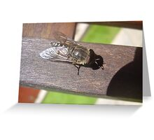 sleeping horse fly Greeting Card