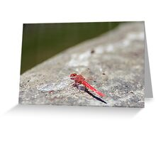 RED DRAGON FLY Greeting Card