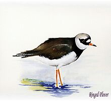 Ringed Plover by anatolia