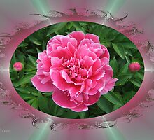 Peony  by Andy2302