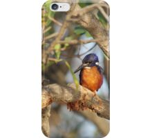Azure Kingfisher iPhone Case/Skin