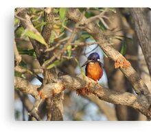 Azure Kingfisher Canvas Print