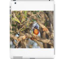 Azure Kingfisher iPad Case/Skin