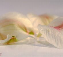 Tender Moments by Suni Pruett