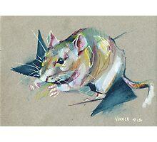 Zelda the rat Photographic Print