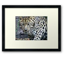 Hunt Framed Print