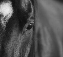 Horse by PhotoBull