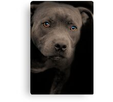 Blue Staffordshire Bull Terrier Canvas Print