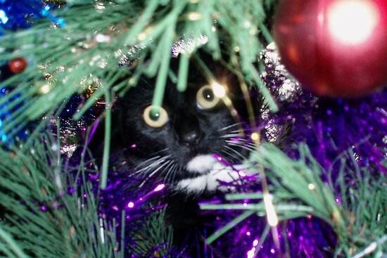 Me? I'm just decorating the tree! by georgiegirl