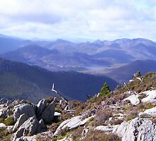 on Mt Read, looking back towards Queenstown/Henty by gaylene