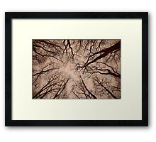 Root or Branch v 12 : Photography by Alys Griffiths Framed Print