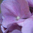 blossom by budrfli