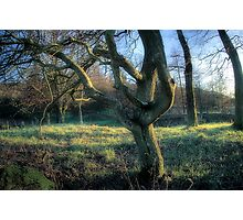 Evening Wood Photographic Print