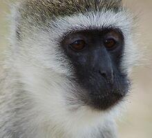 Munching Monkey by ApeArt