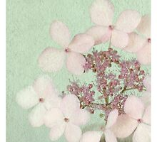 Vintage Hydrangea by Alyson Fennell