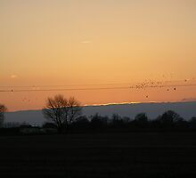 home to roost by kevin1967