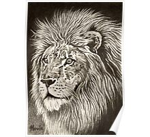 ACEO Lion I Poster