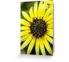 Sun Kissed Petals Greeting Card