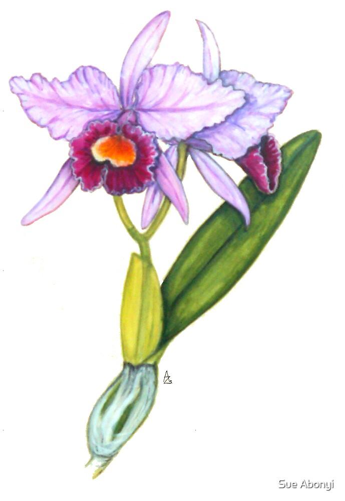 The Orchid Of Love - Cattleya labiata by Sue Abonyi