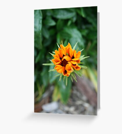 Floral Star Greeting Card