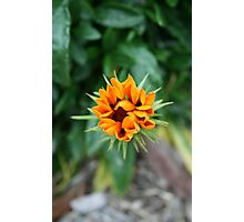 Floral Star Photographic Print